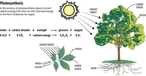 CurrentPhotosynthesis